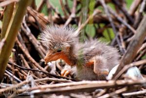 Từ khoảng tháng 4 đến tháng 10 hằng năm, sẽ là mùa chim làm tổ, sinh sôi nảy nở