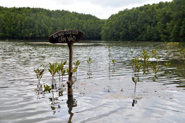 Khu vực dơi sống nằm biệt lập trong đầm nước