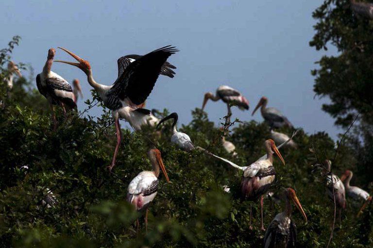 Chim rừng