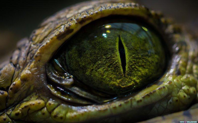 Đầm lầy cá sấu